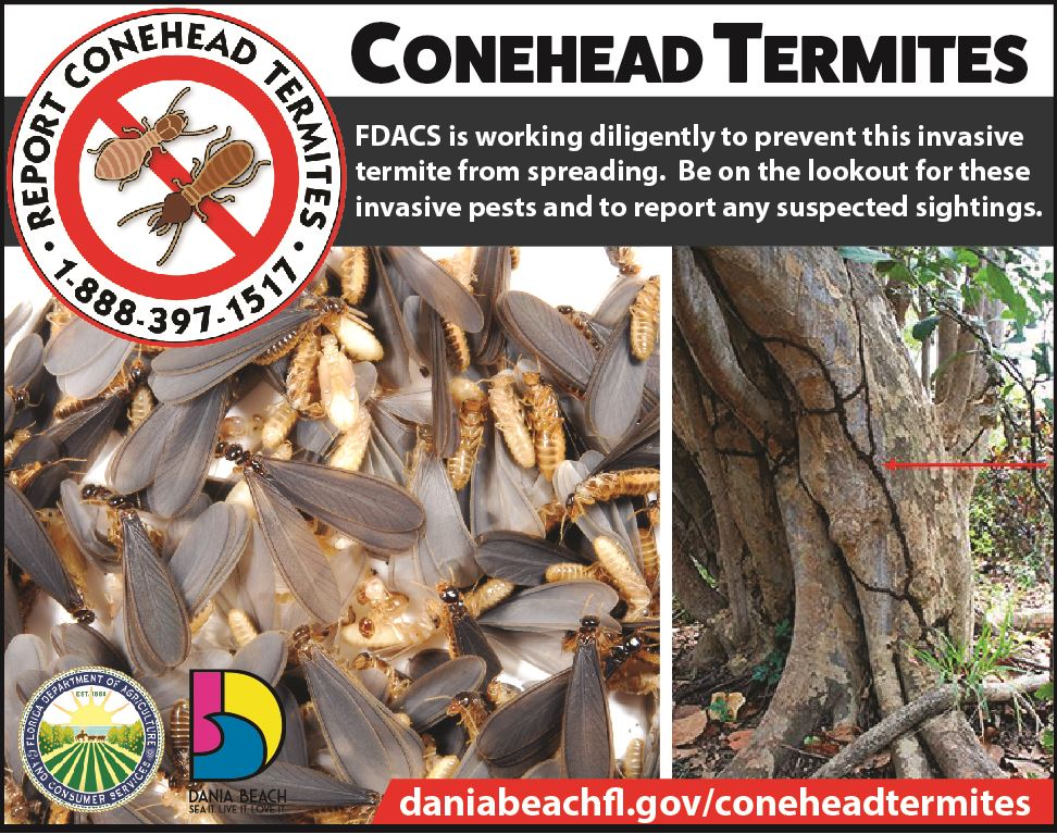 Report Conehead Termites in Dania Beach